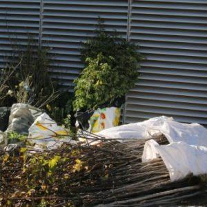 Над 200 дървета са засадени в София през миналата седмица