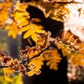 Октомври продължава да ни радва с поредната слънчева седмица