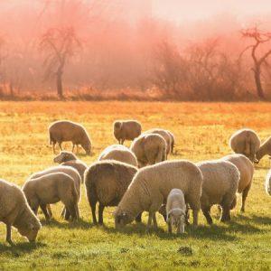 За 15 години животновъдството се сви с цели 72%