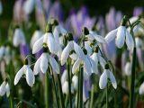 Пролетно време в понеделник - слънчево, топло, тихо